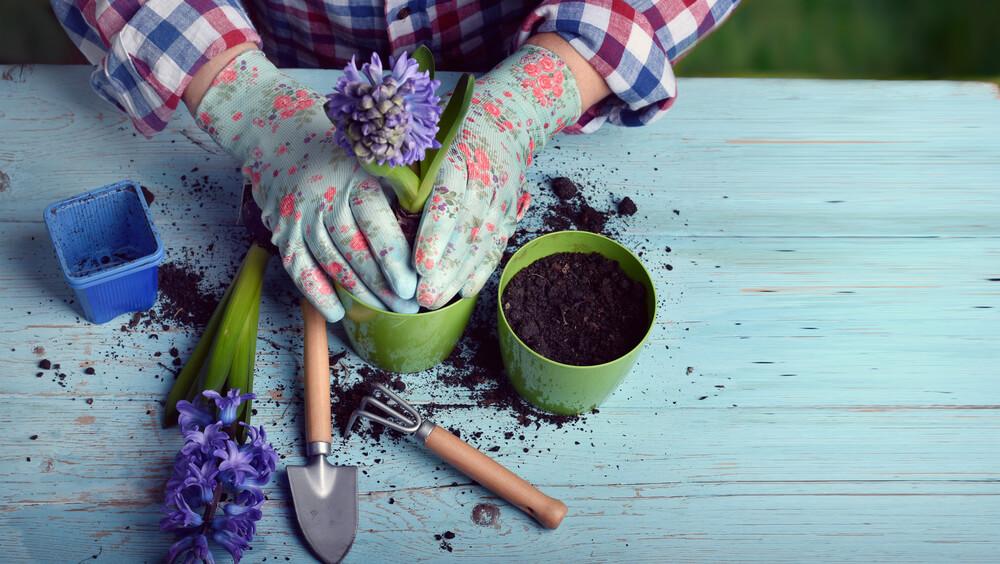 Saksije za cveće
