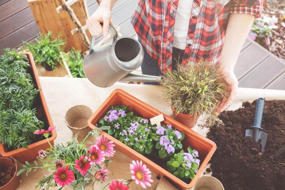 Žardinjere za cveće